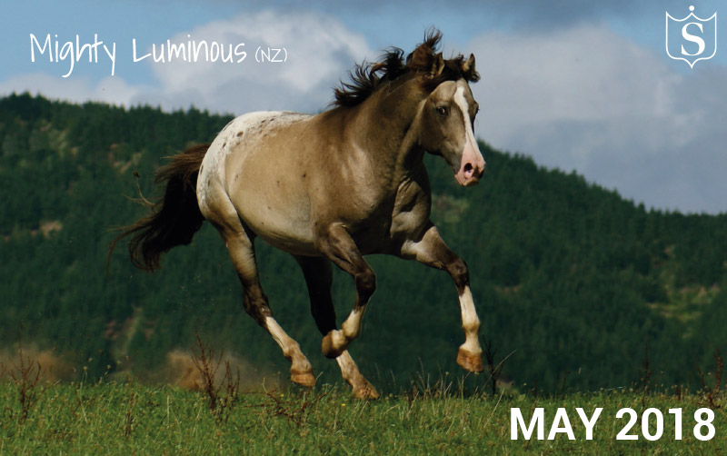 Mr May 2018 - Mighty Luminous