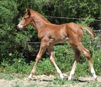 'Chloe' - Filly, 11th Oct 2012